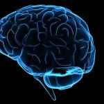 Νέα μέθοδος ανακουφίζει από τους μυϊκούς πόνους από τραύματα στον εγκέφαλο,