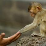 """Επιστήμονες έκαναν τηλεκινητικό """"βουντού"""" σε μαϊμούδες"""